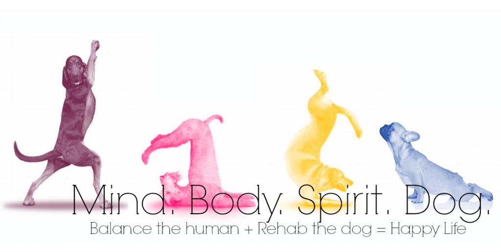 mind body spirit dog high