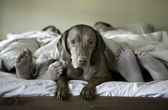 Should My Dog Sleep With Me?
