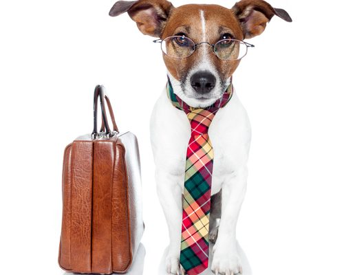 3 Mistakes People Make on Take Your Dog To Work Day