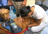 3 Reasons Comfort Dogs in Orlando Really Matter