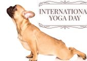 Why Yoga With Your Dog Might Be The Best Thing Ever