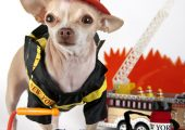 National Pet Fire Safety Day: 3 Ways to Keep Your Pup Safe!