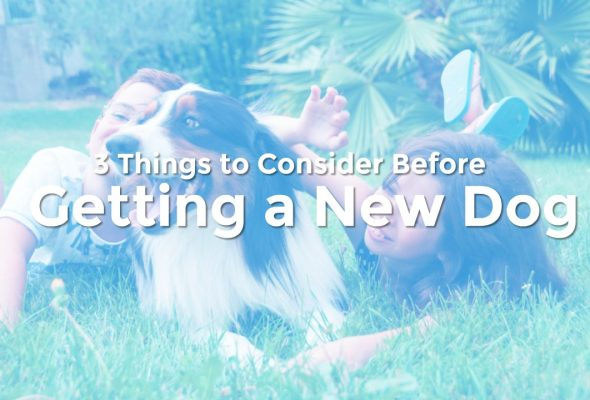 3 Things to Consider Before Getting a New Dog